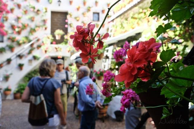 de paseo por Córdoba y la fiesta de los patios
