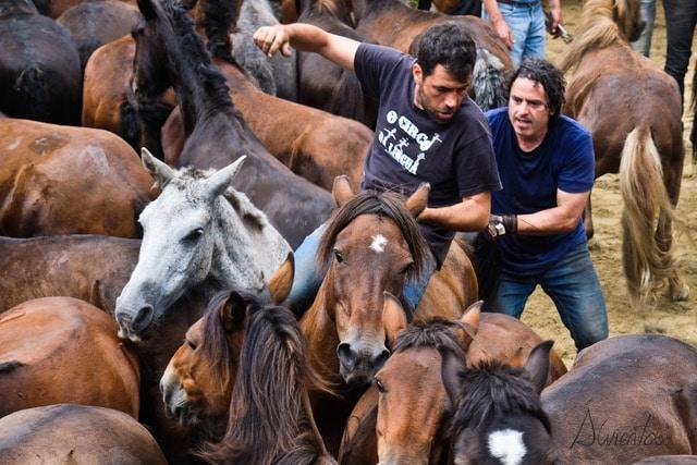 RApa das bestas con Michel Touriño en Sabucedo