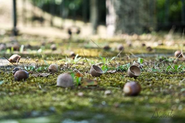 cotobade. imagen de otoño en carballeira de San xusto