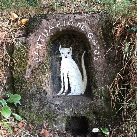 santuario de gatos en Pontecaldelas