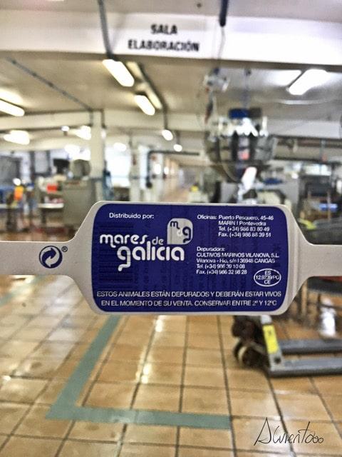 marisco de mares de Galicia