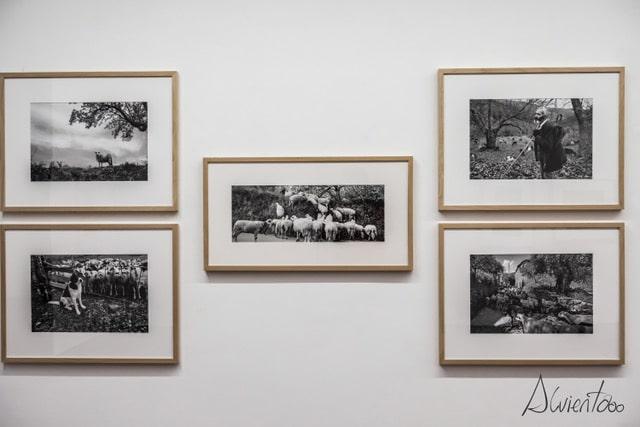 Centro de Fotografia Georges Dussaud