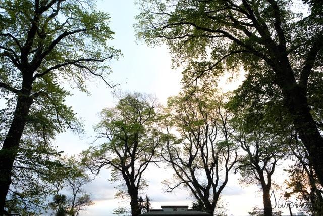 bosque de galicia en el camino de santiago