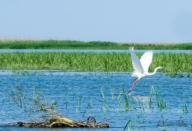 visitar el delta del danubio en rumania