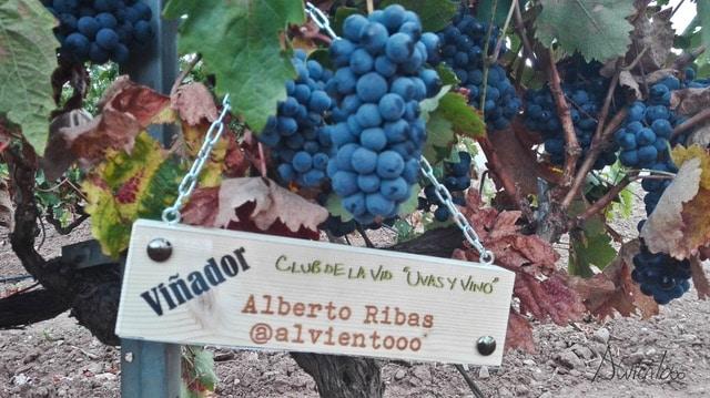 planes para un fin de semana en La Rioja