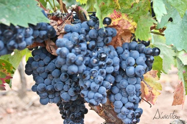 Fin de semana en la Rioja, viñedos
