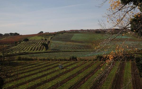 Enoturismo en Alenquer, ciudad europea del vino 2018.