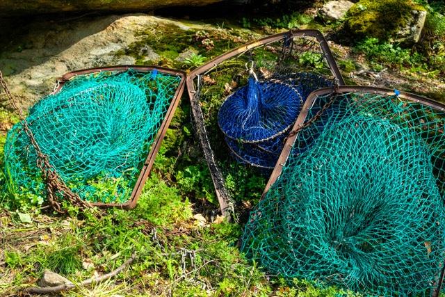 pescar lamprea en el miño