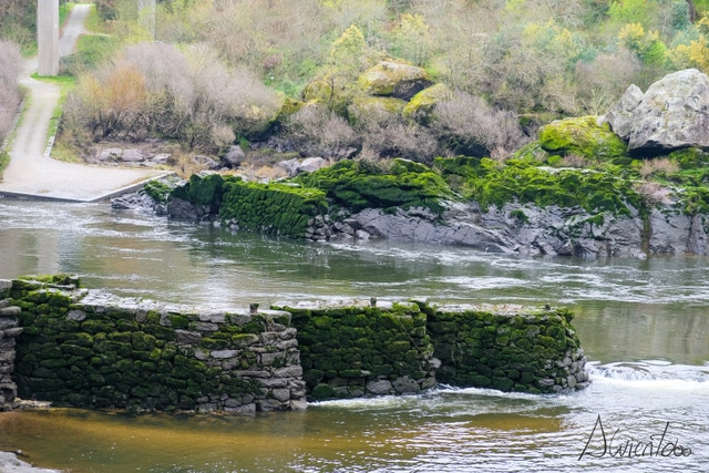 pescadores en el rio Miño