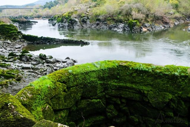 rio Miño y lampreas
