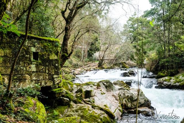 naturaleza en Arbo - Pontevedra