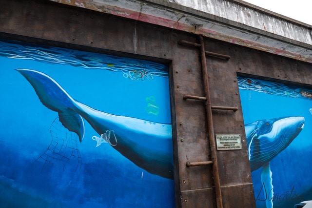 ultima ballena capturada en  Galicia