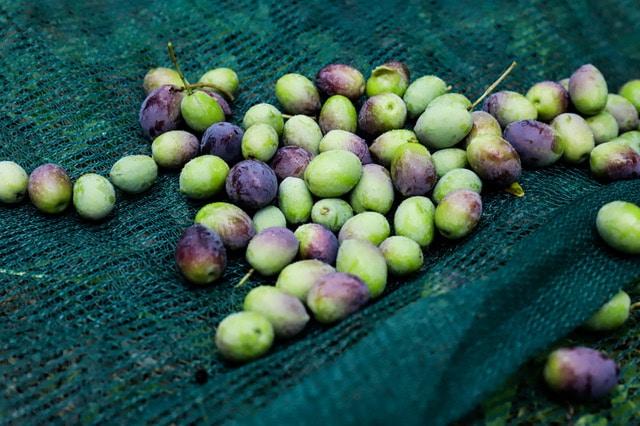 aceite de oliva gallego