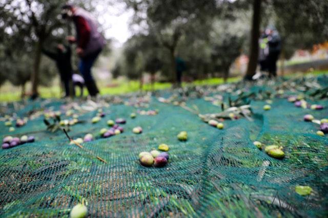 aceites abril en Galicia