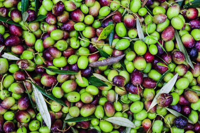 aceite oliva gallego