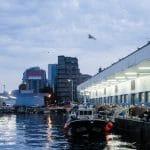 Vigo Pesqueiro, curiosidades del puerto de Vigo