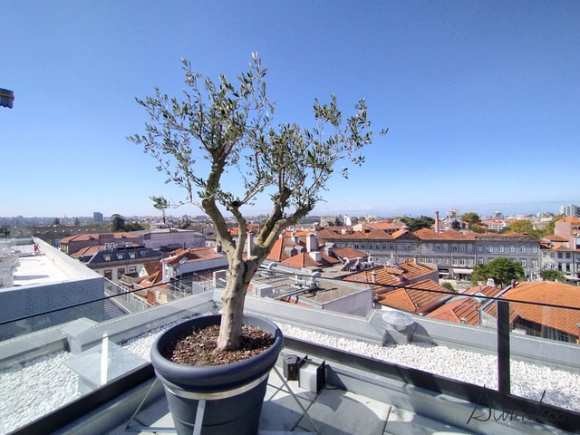 hoteles en Oporto con terraza