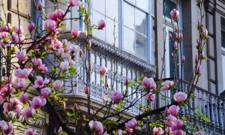 Qué ver en la ciudad de Pontevedra en un día