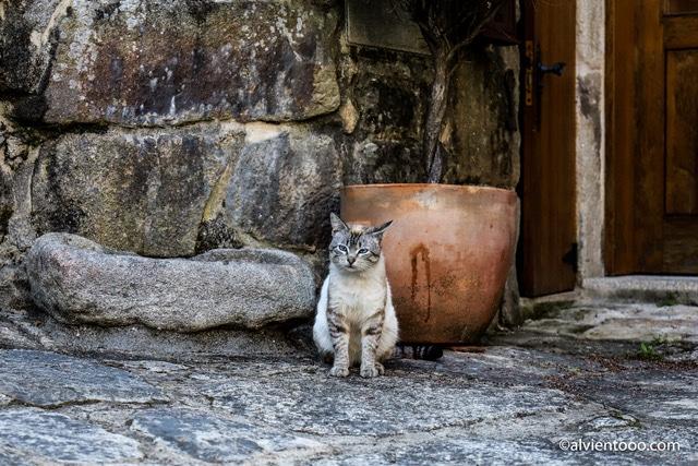 gatos en Combarro