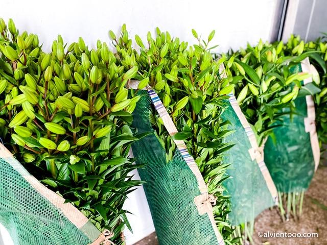 venta de flores en chipiona