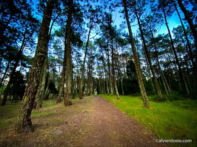 mayor pinar de Europa en Portugal