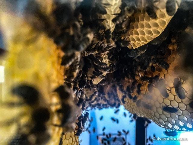 museo miel en galicia